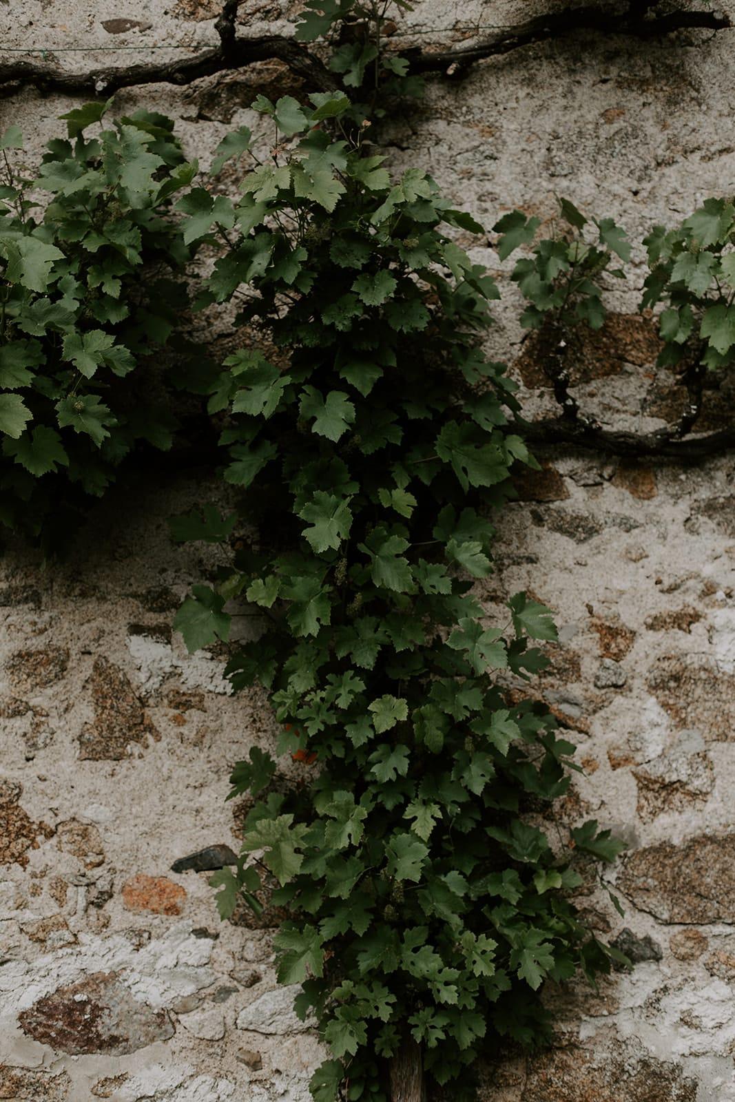 mariage_chateau_la_flocelliere_vendee_flavie_nelly_photographe-169-obonheurdesdames-decoration-mariage-location-vegetal